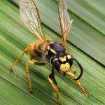 Stinging pest Infestation